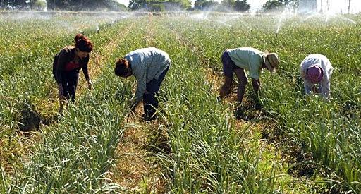 Importancia y características de la producción familiar en Uruguay