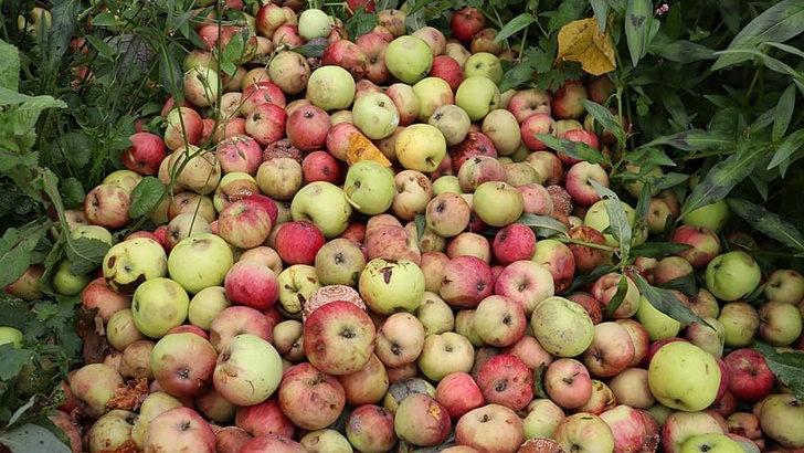 Desecho de alimentos: Solución difícil de acordar y temor de engordar mercado negro
