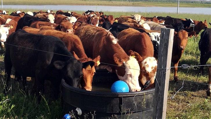 <em>Conexión Interior:</em> Qué es la ganadería regenerativa y por qué hacer la transición hacia ella