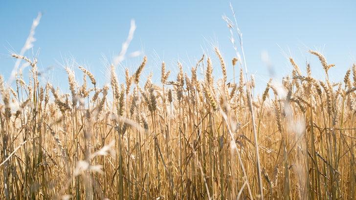 Precios de materias primas están cerca de los máximos de 2012, excepto el petróleo: «Debería contribuir a la recuperación de la economía»