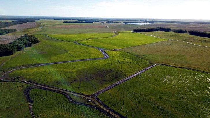 <em>Conexión Interior:</em> ¿Cómo viene el cultivo de arroz?