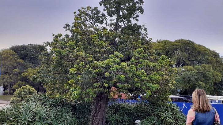 <em>Los ojos de la radio</em>: Paseo botánico por el Parque Batlle