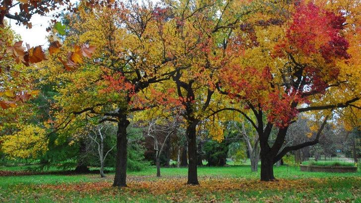 <em>Los ojos de la radio</em>: Visita al Jardín Botánico en otoño