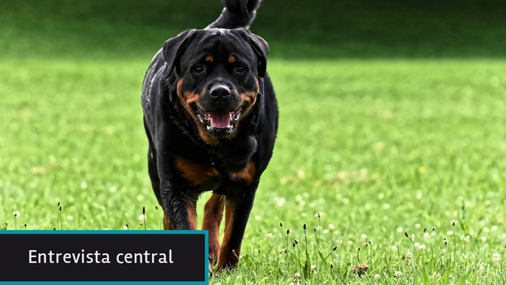 Diputada Nibia Reisch (PC, Ciudadanos) presentó proyecto de ley que prohíbe15 razas de perros peligrosos: «La legislación vigente y los controles son insuficientes» para prevenir muertes y lesionados por mordidas