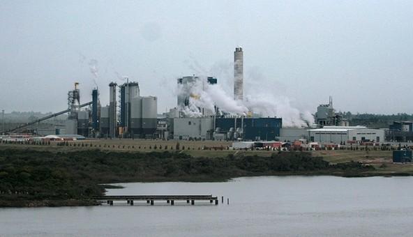 Celulosa genera crecimiento de la industria