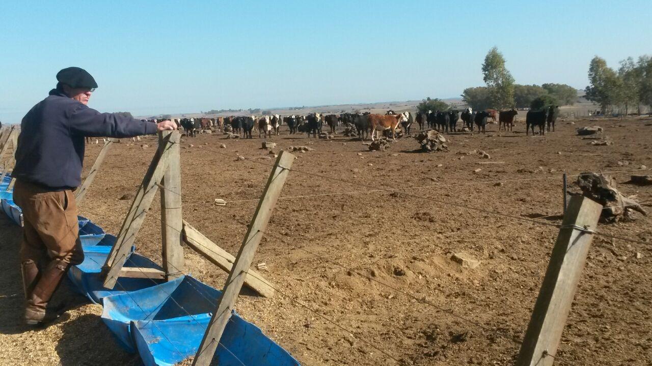 Una estrategia contra la seca: Trabajar, trabajar y trabajar