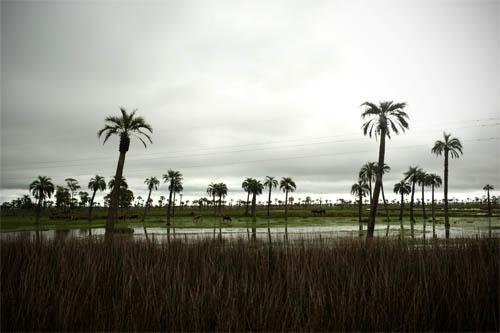 Después de la sequía, lluvia en exceso: cómo enfrenta el campo la variabilidad climática (II)
