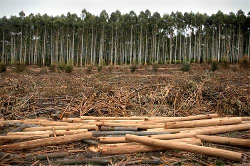 Agro En Perspectiva: ¿Cuál es la situación de la forestación?