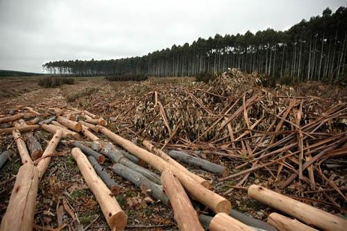 Ventana al FuturoInvestigación de Udelar relativiza impacto ambiental de la forestación y concluye que es «sustentable»