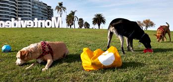 A partir de octubre será obligatorio el uso de chips para perros