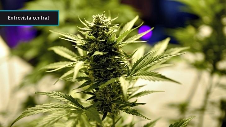 «Se nos pasa el tiempo» para empezar a producir cannabis medicinal: «Teníamos un monopolio», pero hoy otros países «están yendo mucho más rápido que Uruguay»