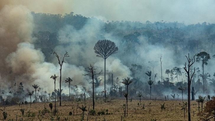 «Una suerte de neblina humeante constante»: El fuego en la selva según un uruguayo en Bolivia