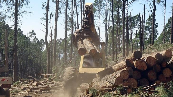 Cabildo Abierto formó mayoría con el FA y el PERI para aprobar limitaciones a la explotación forestal