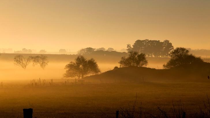 Conexión Interior: ¿Qué importancia tiene el campo natural en la economía agropecuaria actual?