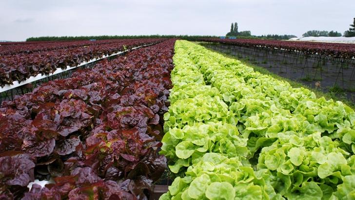 Conexión Interior: ¿Cómo es hacer horticultura desde Tacuarembó, el corazón ganadero de Uruguay?