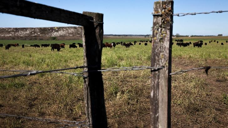 Conexión Interior: Sobre la salud del suelo