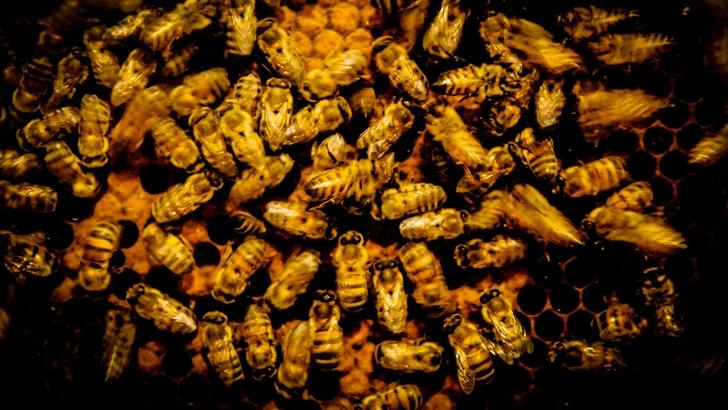 Conexión Interior: ¿Cómo trabaja un apicultor?